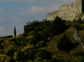 Ruines et Genêts