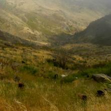 Le troupeau de Sebastián Vera Herrera (alias Lito) près d'Alajero